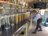 5 Million walleye eggs in hatchery jars